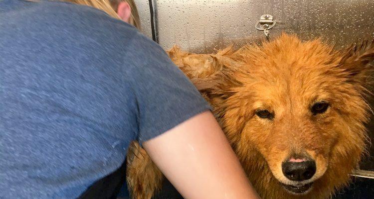Dog Grooming Stratford Ct