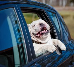 Get your Ride on in Our Wag-on!