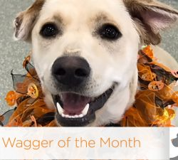 Wagger of the Month: Holly