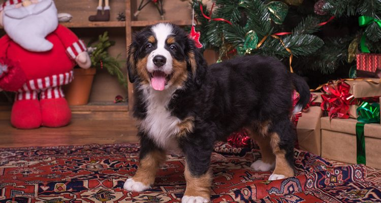 Wag Central's Holiday Gift Guide