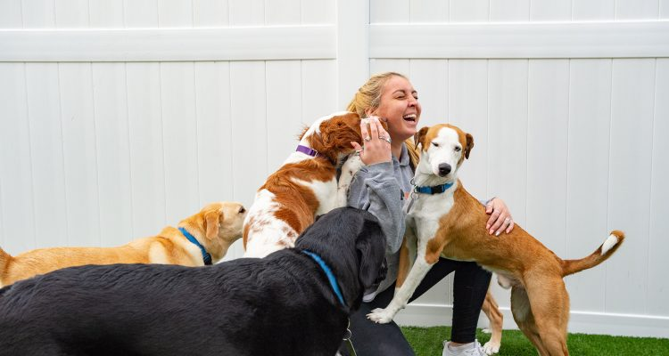 So You Want To Be A Dog Owner?