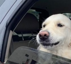 Riding In Cars With Pups