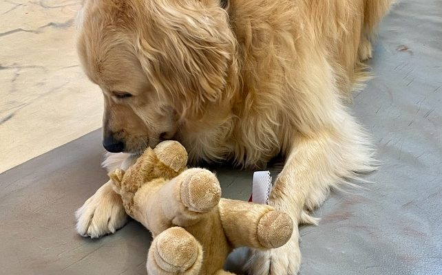 5 Reasons To Give Your Dog A Stuffy
